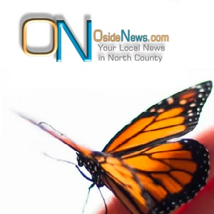Oside News: How We Started Growing Butterflies in Our Shop