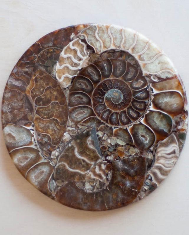 Ammonite Fossil Slice