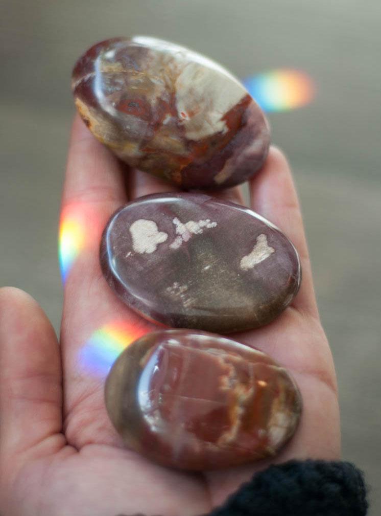 Petrified Wood Palm Stone small