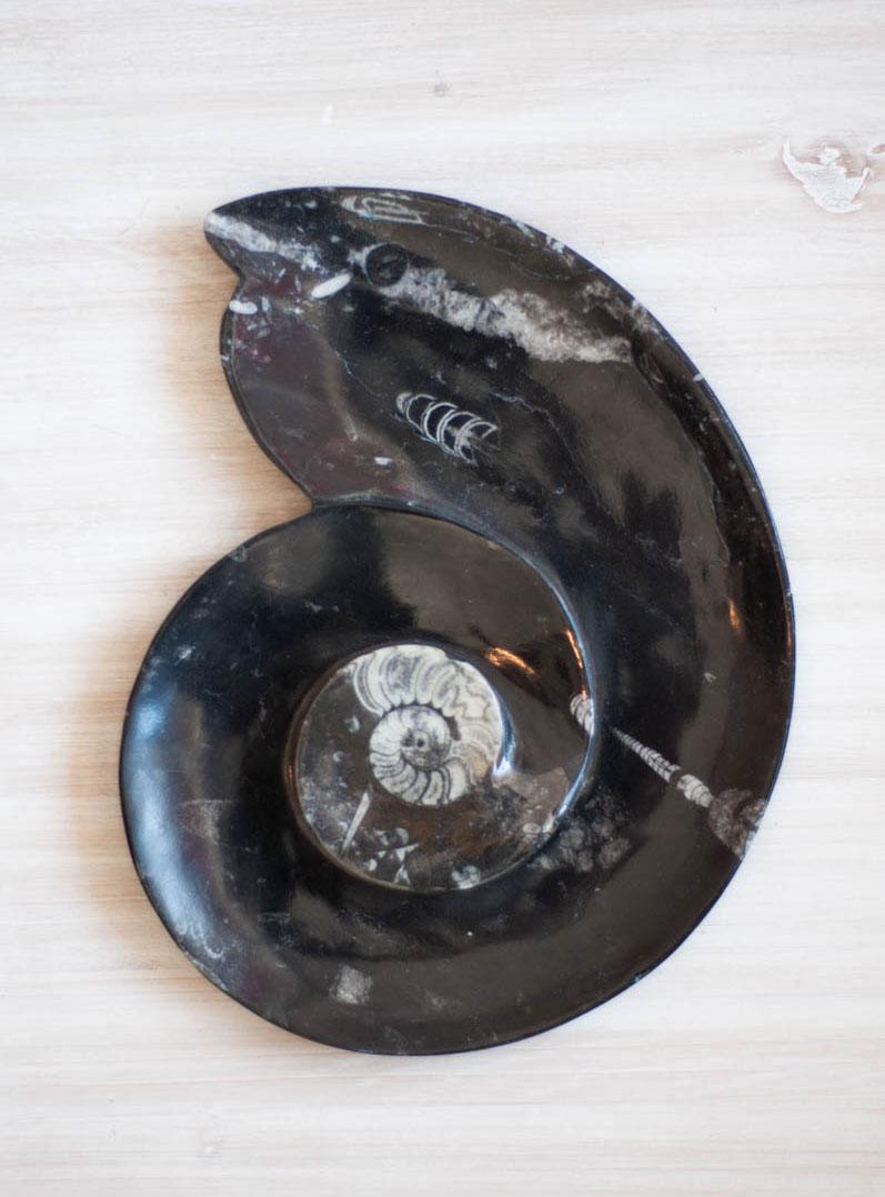 Orthoceras Plate - large spiral